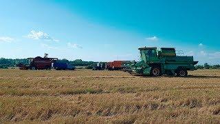 Переехали на Одоевские поля  Продолжаем молотить пшеницу