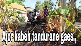 REAL KEHIDUPAN pedesaan #traktorcapung