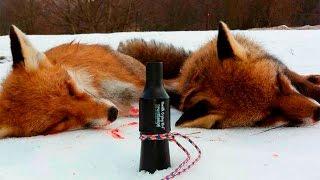Как охотится на лису с манком