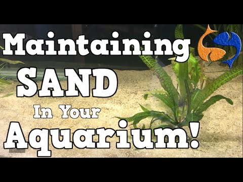 Maintaining A Sand Substrate In Your Aquarium! KGTropicals!!