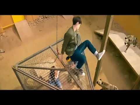 Pashto video with tiger
