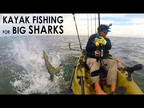 Kayak Fishing: BIG Sharks Offshore | Field Trips with Robert Field