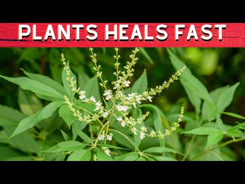 Video 10 HERBS & PLANTS THAT HEALS FAST - Philippines Travel Site|FULL HD
