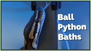 Should You Bathe/Soak Your Ball Python?