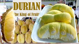 Durians the King of Fruits in The World   Natural Organic Fruits from Cambodia in Southeast Asia