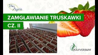 Poprawa jakość i trwałości truskawki. cz II