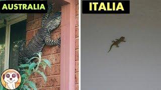 10 MOTIVI PER NON VISITARE L' AUSTRALIA