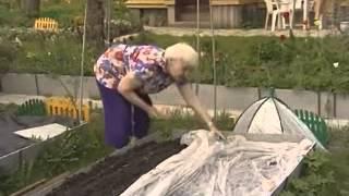 Посеять морковь и не прореживать - очень легко видео