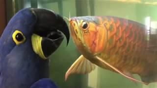 Прикольные попугаи! Приколы про попугаев! Смешные попугаи! Топ 10