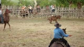 preview picture of video 'Rodeo  en Haiti Mejia de El seibo,Rep.Dominicana 4'