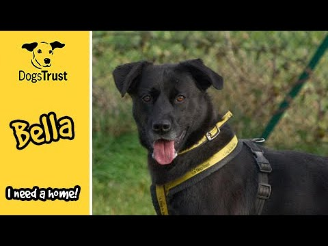 Bella the Lab Cross Loves Playing Outdoors | Dogs Trust Salisbury