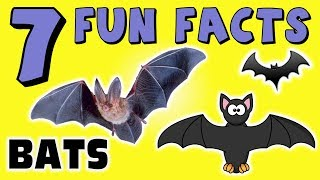 7 FUN FACTS ABOUT BATS! FACTS FOR KIDS! Learning! Vampire! Learning Colors! Fun! Funny! Sock Puppet!