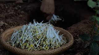 (豆芽)Long, tender and fresh: bean sprouts are nutritious and pollution-free.|Liziqi channel