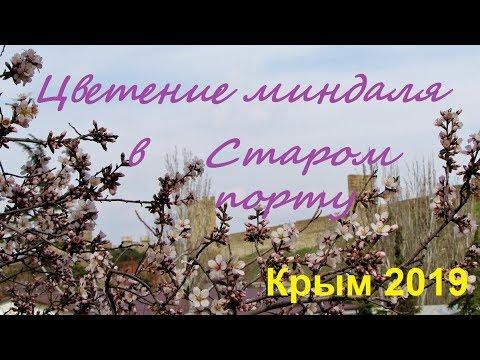 Как цветет миндаль в Старом Порту, Судак. Крым 2019