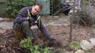 How To Cut Perennials In Spring