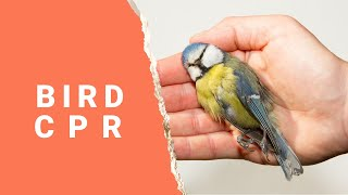 How to give your bird CPR | CPR for Birds