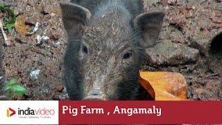 Pig Farm, Angamaly