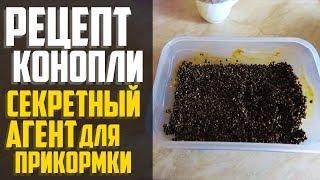 Как приготовить семена конопли для прикормки