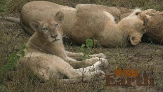 WildEarth - Sunset Safari - 4 April 2020, Part 2