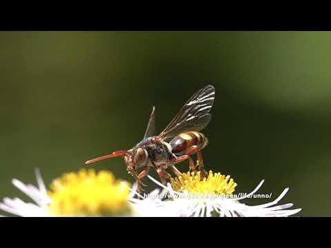 庭のハルジオンに来た虫たちの飛翔