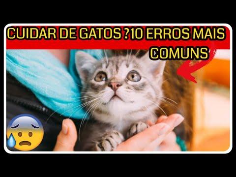 Cuidar de gatos - 10 ERROS QUE OS DONOS DE GATOS COMETEM