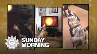 "The ""Sunday Morning"" theme's canine accompanists"