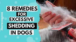 Reasons of  HAIR SHEDDING in dogs . How to STOP Excess Shedding in dogs || Monkoodog