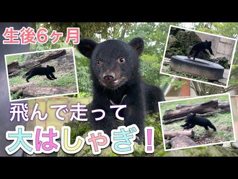 【生後6ヶ月】ツキノワグマの「望鈴ちゃん」お外遊びで大はしゃぎ!