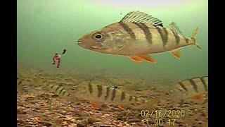 Запрет ловли на плещеевом озере 2020