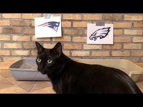 Black Cat Predicts Super Bowl 2018 WINNERS!