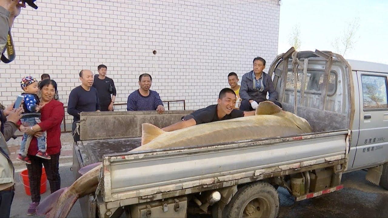 Китайский рыбак поймал гигантскую рыбу