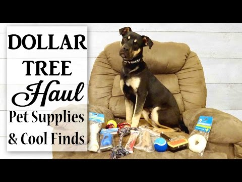 MEET OUR NEW PUPPY! | Dollar Tree Haul