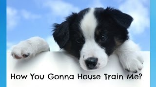 How to House Train a Border Collie - Border Collie Training - How To Potty Train a Border Collie Pup