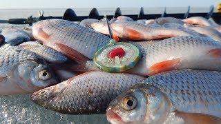Зимняя рыбалка в алтайском крае 2019 декабрь