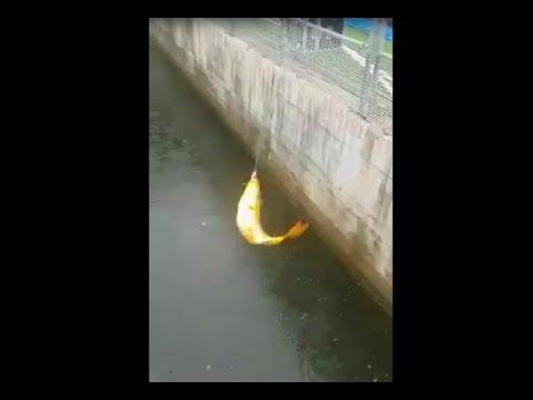 Fischen im Fußballstadion