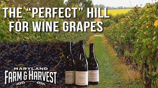 Why Hillsides Grow Better Wine Grapes   Maryland Farm & Harvest