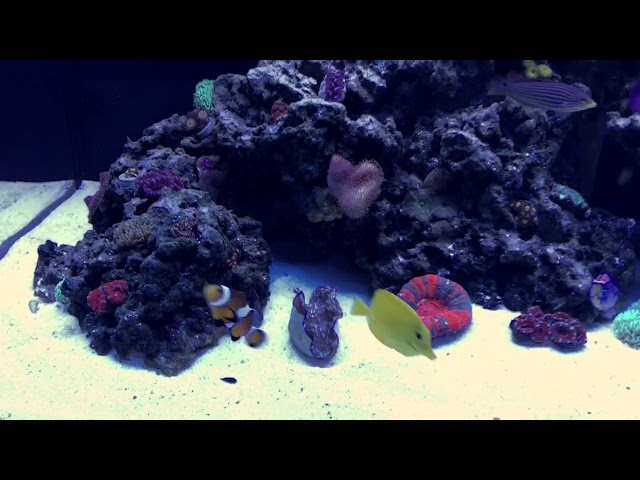 Trav's 70g Reef Tank - March 2018
