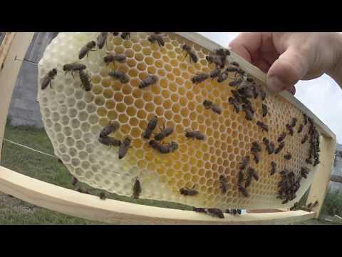 пчеловодство без вощины начало !!!