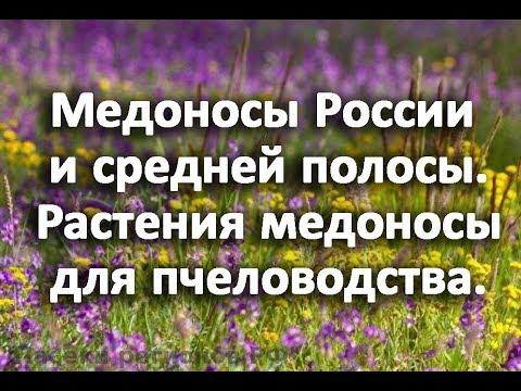 Медоносы России и средней полосы. Растения медоносы для пчеловодства.