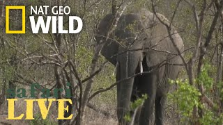 Safari Live - Day 61 | Nat Geo WILD