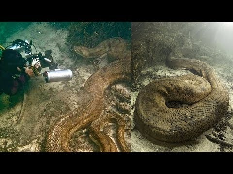 These Are the Strangest Things to Be Found Underwater