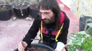 Fertilizante Natural Para Crecimiento De Marihuana Y Otras Plantas.