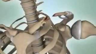 Shoulder Fractures - DePuy Videos