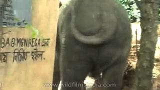 Elephant attacks village in West Bengal, India