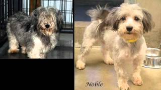 National Mill Dog Rescue - Before & After Photos