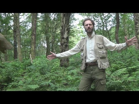 The Truth About Medieval Forests