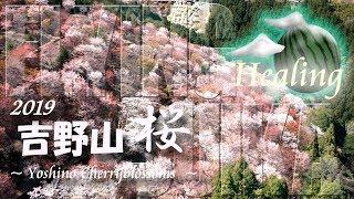 【ヒーリング ドローン 2時間 4K】吉野山 桜 2019:Healing Drone Aerial Cherry Blossoms in Yoshino
