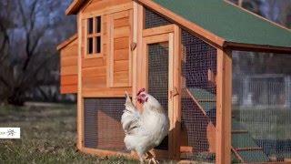 Top 7 Chicken Coops