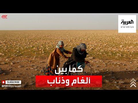 العرب اليوم - شاهد : جامعو الكمأ في صحاري العراق بين سندان الألغام ومطرقة الذئاب