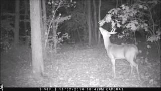 Back yard buck.  7 pt.